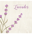 Laveder over wooden panels vector image vector image