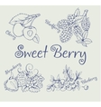 Set of blackberry strawberry blueberry cherry vector image