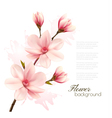 Spring background with blossom brunch of pink vector image