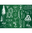 Biology plant sketches on school board vector image