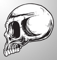 skull sketch design element vector image