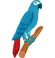 grey parrot isolated on white vector image