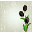 Abstract floral grunge background with black vector image