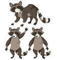 Raccoon in three positions vector image