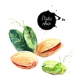 Hand drawn watercolor painting nut on white vector image