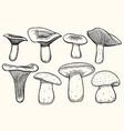 set of mushroom vector image