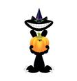 halloween cat with pumpkin vector image vector image