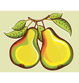 Pears vector image