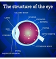 Eye structure blue vector image