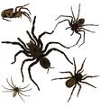 Spider set vector image vector image