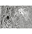 Zebra and cheetah and pattern background vector image
