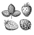 strawberry drawing set isolated hand drawn vector image