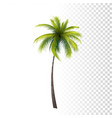 green classic palm vector image