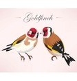 Pair of goldfinches vector image