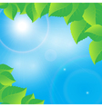 green leaves on a sunny sky background vector image vector image