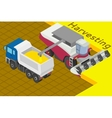 Combine harvester collect wheat in the field vector image