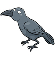 Crow vector image