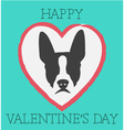 Happy Valentines Day Boston Terrier vector image
