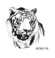Tiger head hand drawn vector image