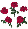 silhouettes of roses vector image