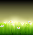 Green grass with flowers vector image