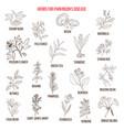 best natural herbs for parkinson disease vector image