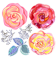 Peach pink red rose vector image vector image