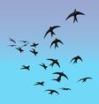 Birds sillhouette vector image