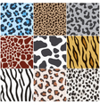 leopard zebra cow tiger giraffe skin pattern vector image
