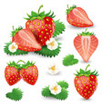 ripe strawberry with leaves and blossom set vector image