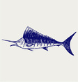 Sailfish saltwater fish vector image