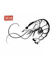 Shrimp black and white vector image