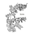 Bleeding heart flower hand drawn black and white vector image