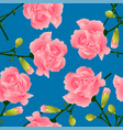 dianthus caryophyllus - carnation flower clove vector image