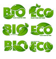 collection of bright and shine leaf signs symbols vector image