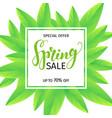 spring sale banner vector image