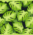 monstera tropical palm leaves pattern vector image