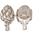 engraving artichoke