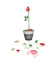Beautiful Red Rose in Ceramic Flower Pot vector image