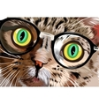 Hand drawn portrait of Cat with glasses vector image