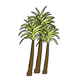 Comic cartoon palm tree vector image