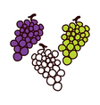 The grapes vector image
