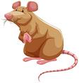 Brown rat vector image