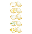 Set of Thai Coconut Rice Cake on White Background vector image vector image