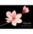 Branch with two pink magnolia flowers vector image