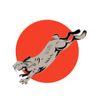 Jack Rabbit Jumping vector image