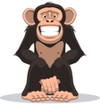 Funny little monkey vector image