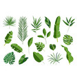set of tropical leaves different green leaf vector image