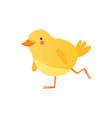 cute baby chicken walking funny cartoon bird vector image