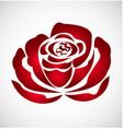 red rose flower logo vector image